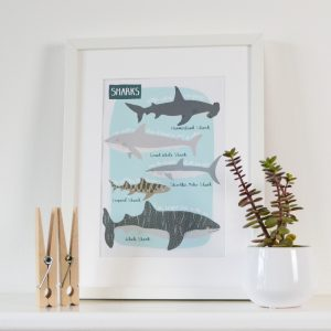 Shark print beautifully illustrated by Hannah Stevens